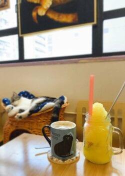 【貓奴狗奴望呢邊】11間香港特色貓狗Cafe(內有黃店)
