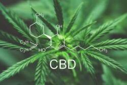 【Fact Check系列】大麻萃取物CBD係好野!CBD功用&產品