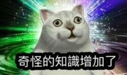 【迷因lover】4張同動物有關嘅meme來源
